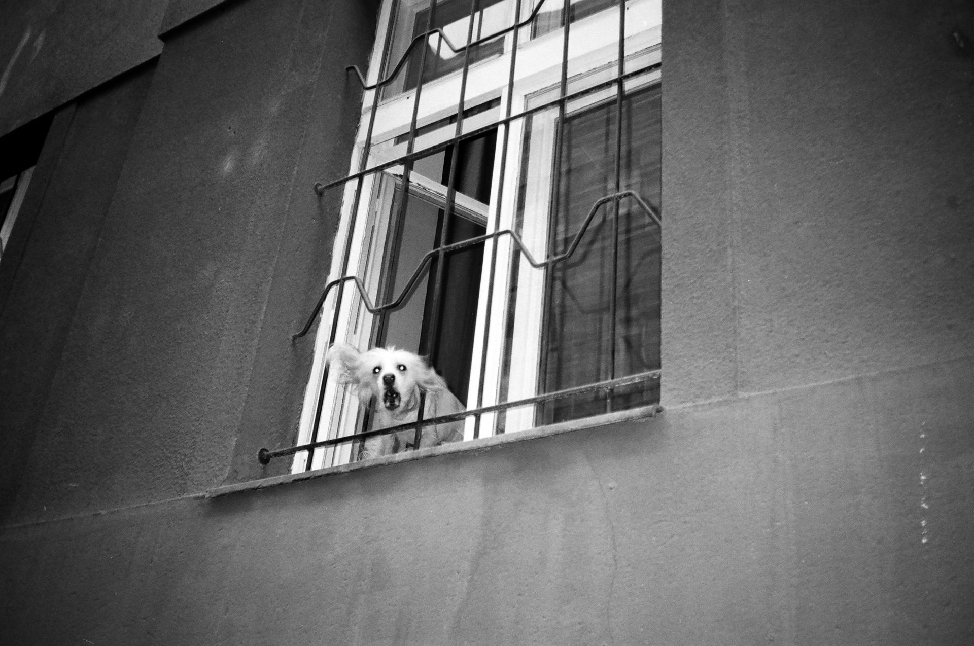 ben bishop photography prague dog